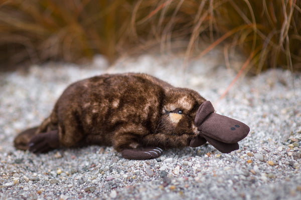 """Rena"" Duck Billed Platypus"