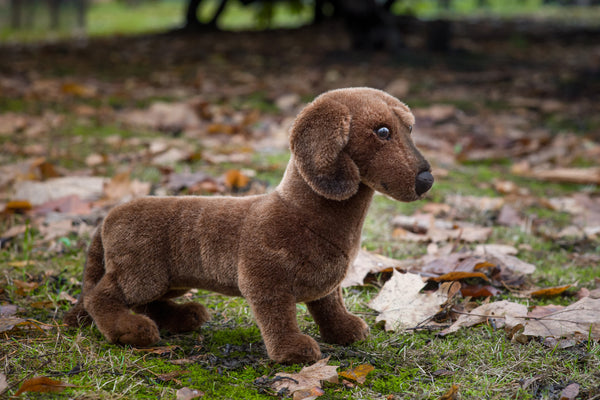 """Waldi"" Mohair Smooth Haired Dachshund"