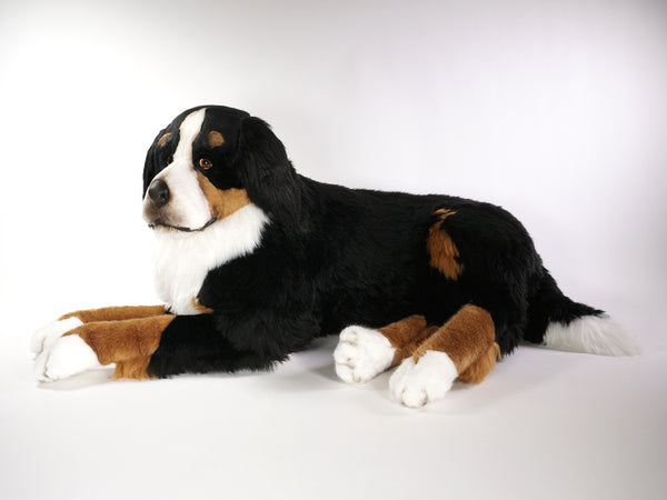 """Ella"" Bernese Mountain Dog"