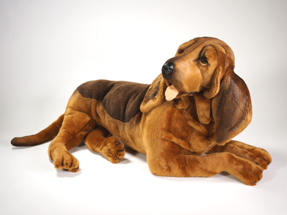 """Knotty"" Bloodhound"