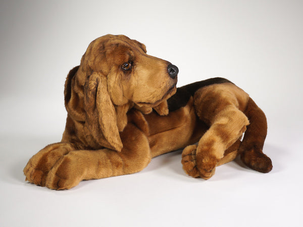 """Stretch"" Bloodhound"