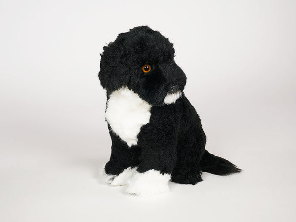 """Girella"" Portuguese Water Dog"
