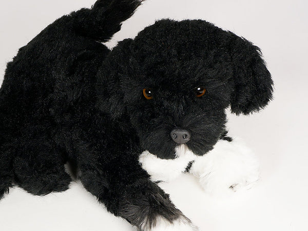 """Captain Kibbles"" Portuguese Water Dog"