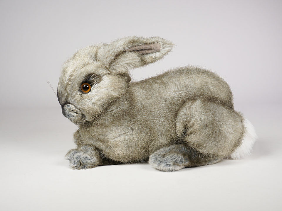 """Oolong"" Bunny Rabbit"