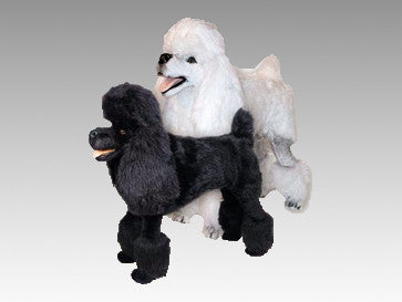 """Marilyn"" Poodle"