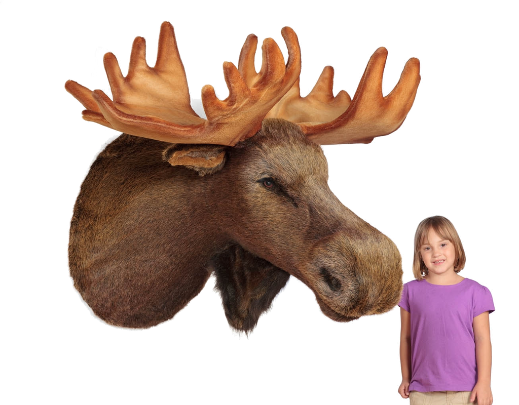 """Mariner"" Moose Head Wall Mount"