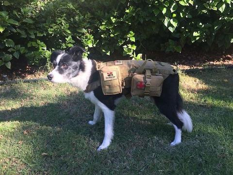 Complete K9 Emergency Kit Sored Gear