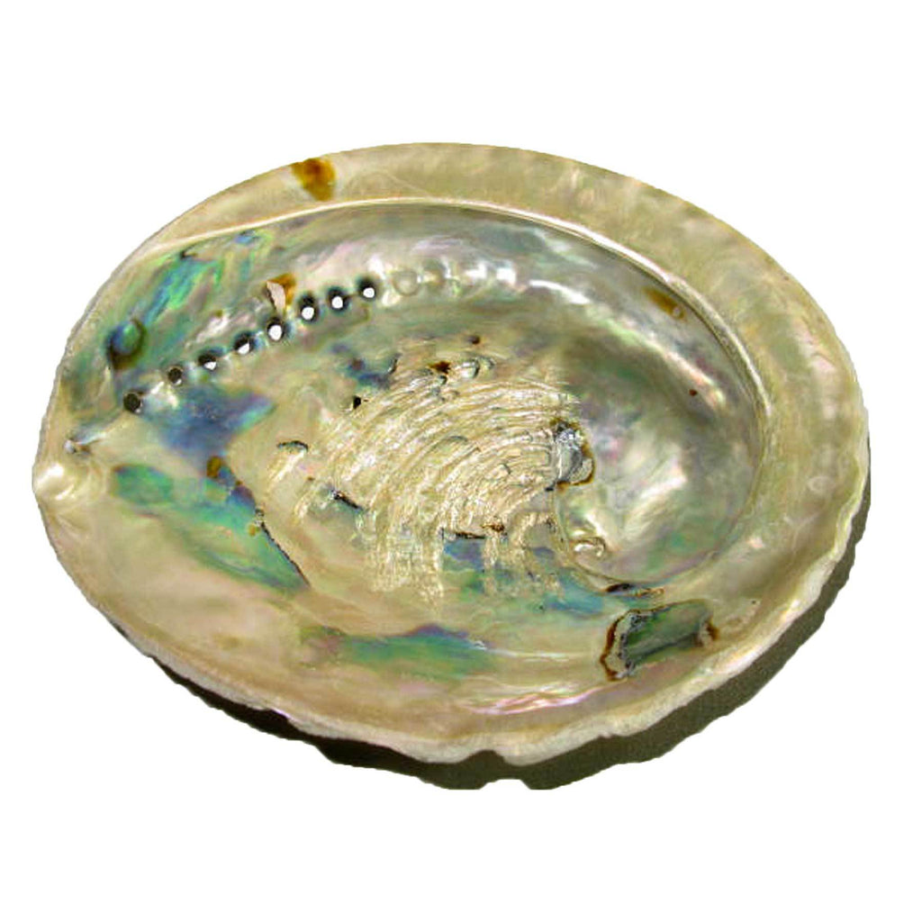 "Genuine African Abalone Shell Natural Medium 5""-5.5"" Crafts Decor Jewelry Smudging"