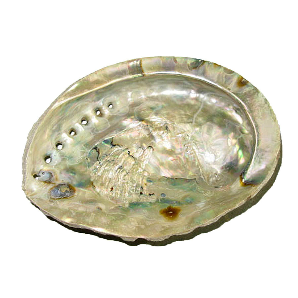"Genuine African Abalone Shell Natural Small 4""-5"" Crafts Decor Jewelry Smudging"
