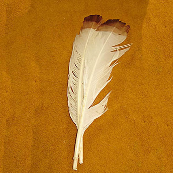 "Image of 78003005-01H - Imit. Eagle Feathers 12"" White/Brown Tip 6Pk"