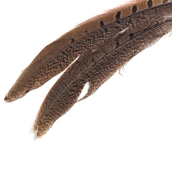 Image of 78023224 - Ring Neck Tail Feather 8 - 10""