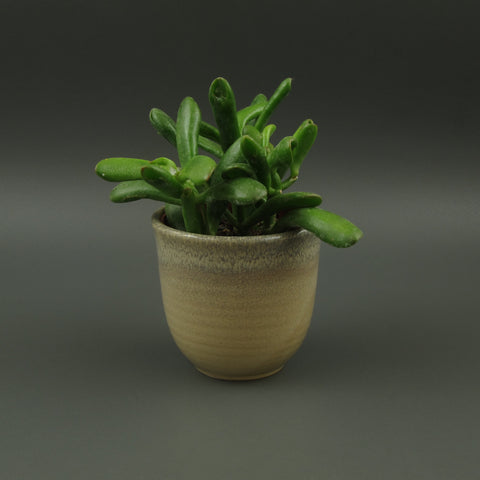 Speckled stoneware Planter / pot