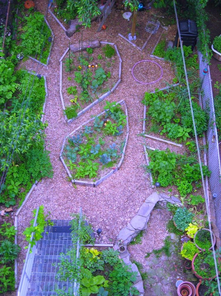 BACKYARD: SUMMER UPDATE FROM ABOVE