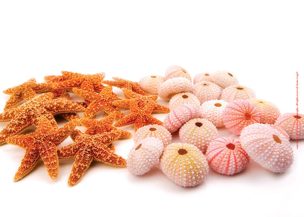 Starfish & Sea Urchins