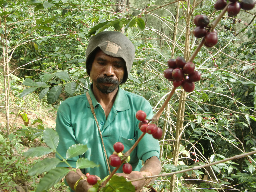 Coffee From East Timor