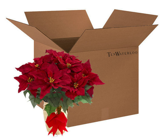 TenWaterloo 20 Inch Potted Burgundy Red Poinsettia Plant - Artificial Christmas Poinsettia Plant in Gold Foil Wrap