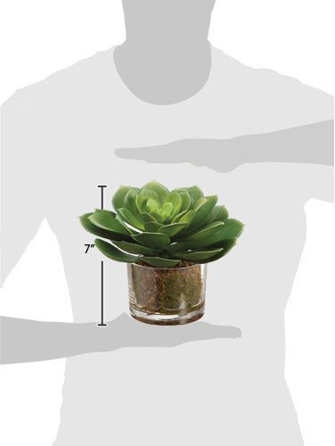 all Large Artificial Potted Echeveria Succulent Plant In Glass Pot - 9 Inches