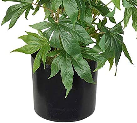 TenWaterloo Artificial Cannabis Plant, Potted Plant 36 Inches High, Fake Marijuana Potted Decor Plant