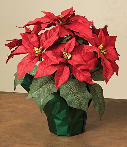 "15"" Potted Red Poinsettia Plant with 7 Flowers"