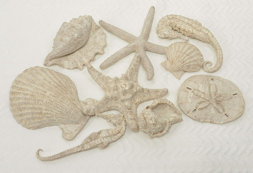 TenWaterloo Shells and Starfish Bowl Filler, Polyresin Shells Scupltures, 9 Pieces
