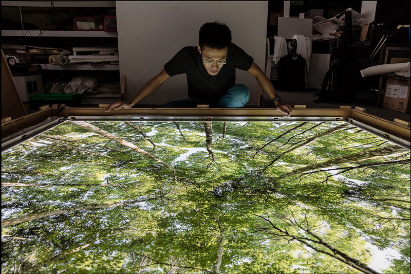Photographer Ming Thein with his fine art forest canopy print installed in DSA's Premium LED Light Box with high output LEDs, graphic size 5' x 6', image courtesy Ming Thein | mingthein.com