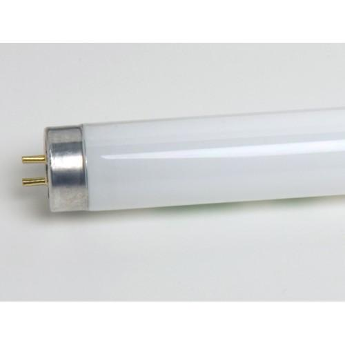 differ lightbulb incandescent fluorescent how compact from lamps lamp and