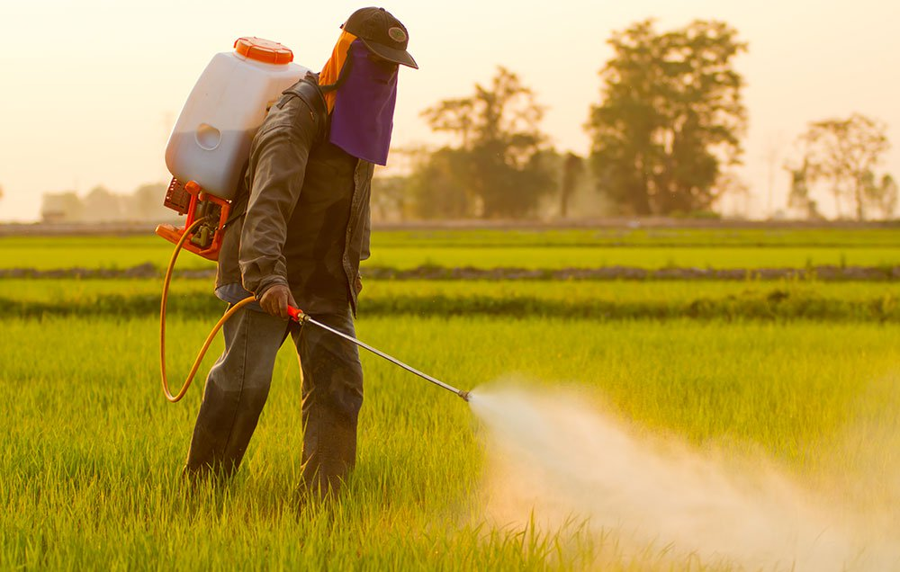 Pesticides: How to Avoid Them by Using Chemical-Free Solutions