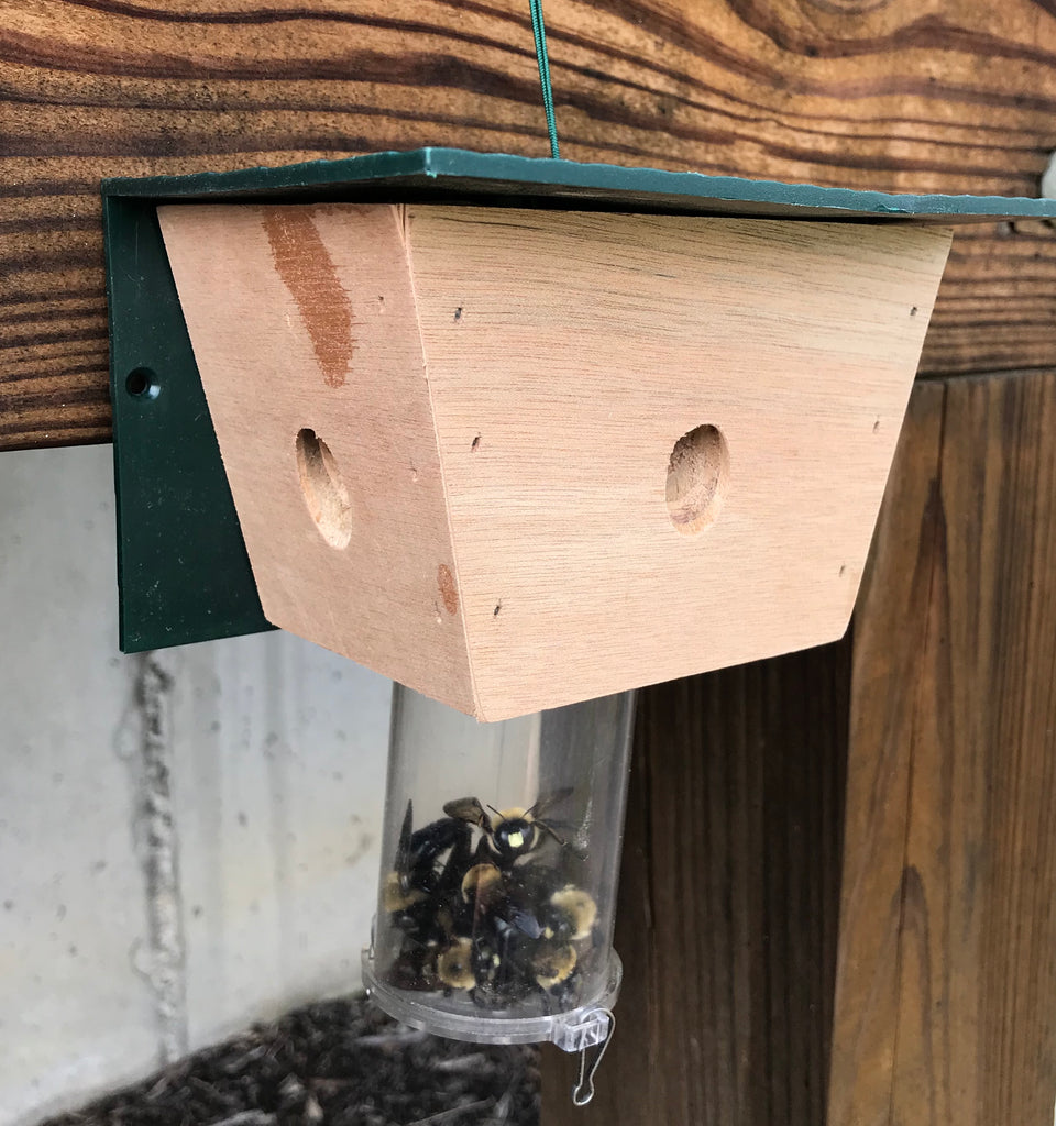 Most Effective Time to Install a Carpenter Bee Trap