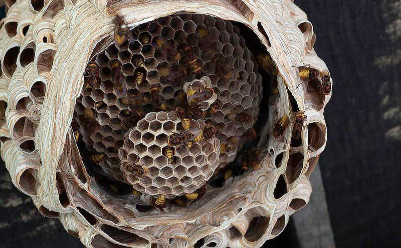 Hornets nests are greyish made out of chewed up wood pulp, water and saliva.