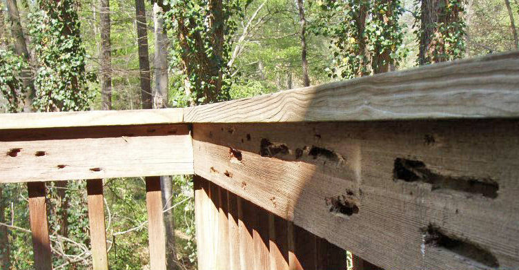 Carpenter bee infestations can be visible or completely hidden.
