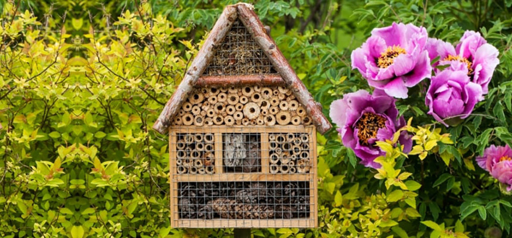 A garden and bee lodge are great ways to save the bees.