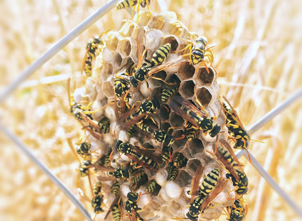 Don't let them fool you, wasps have predators.