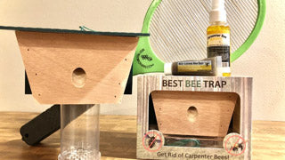 Carpenter Bee Bait Questions Answered