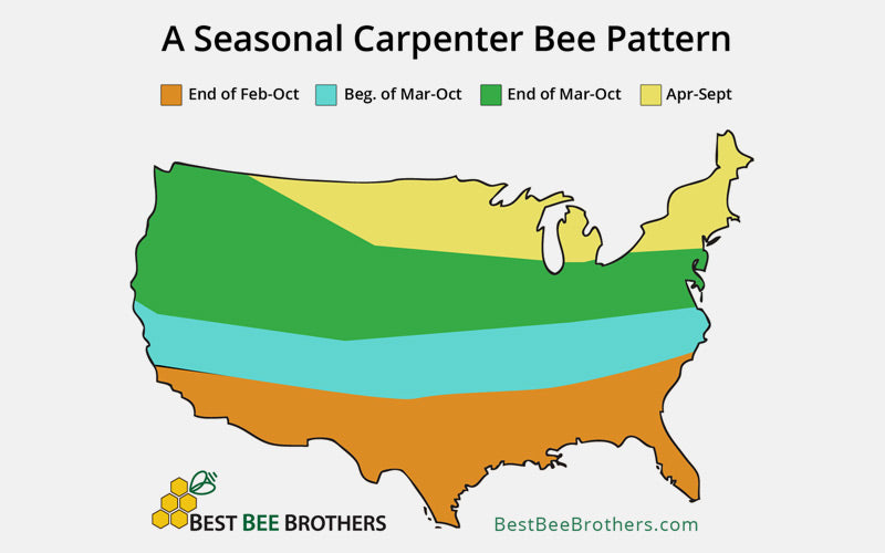Carpenter Bee Seasonality