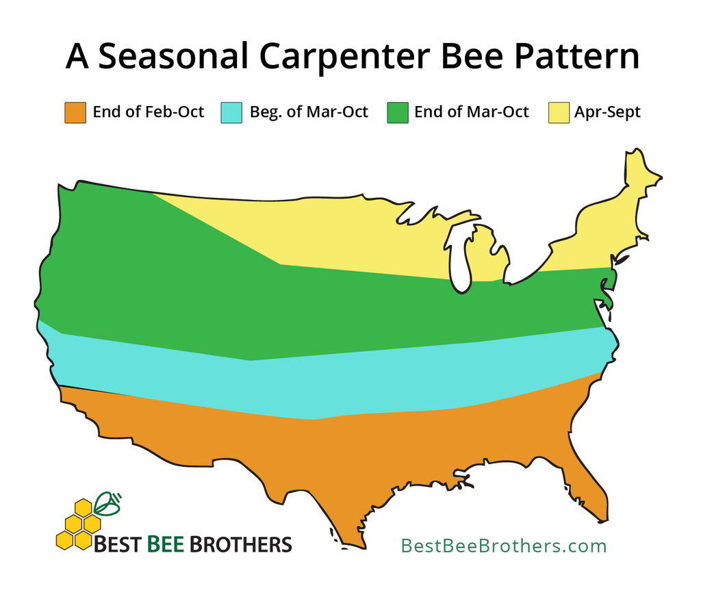 Seasonality of Carpenter Bees by State - US Map