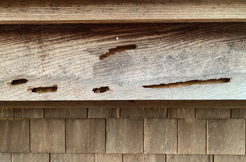 Carpenter Bee Damage | Best Bee Brothers