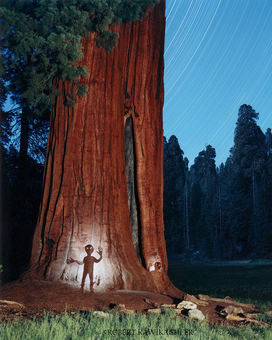 Aliens at the Sequoias