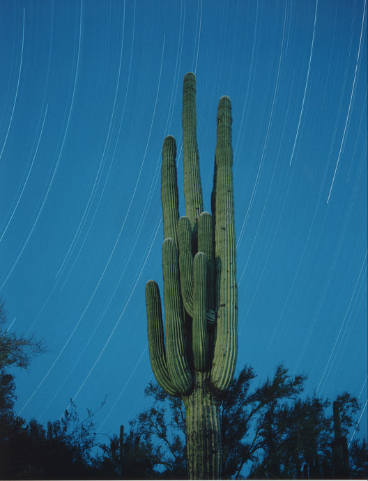 Saguaro Star Trail
