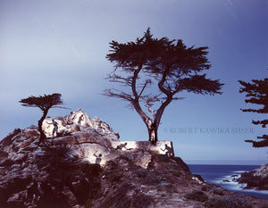 Spirits Honoring the Lone Cypress 2