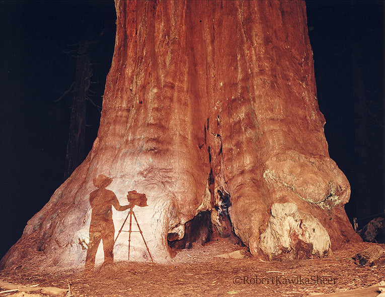 Young Ansel at the Sequoias