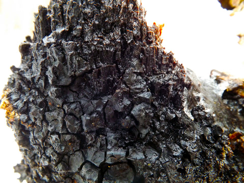 Chaga Close Up
