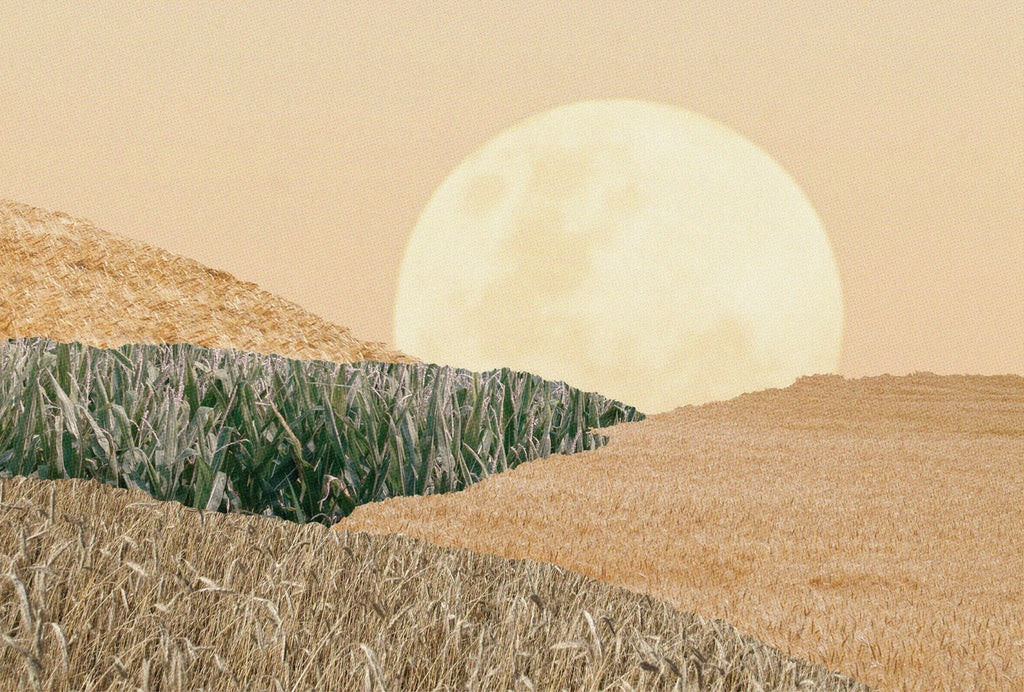 The Corn Moon