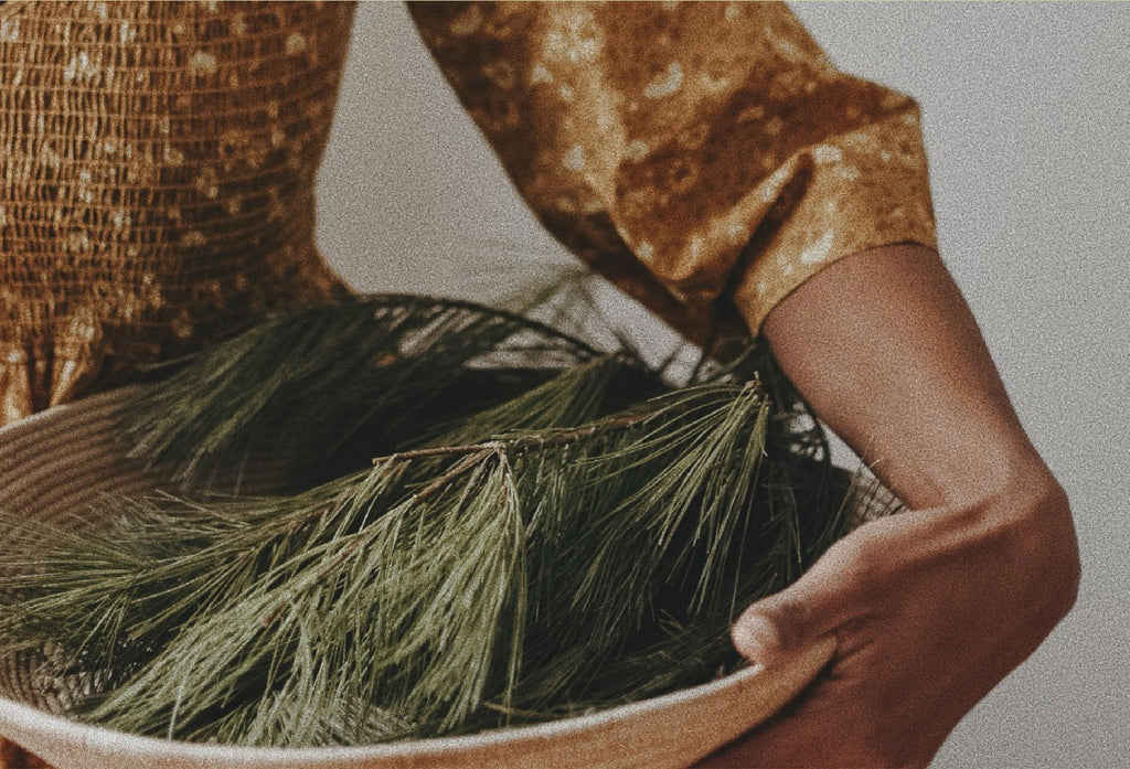 Making Pine Needle Tea with Alyson Morgan
