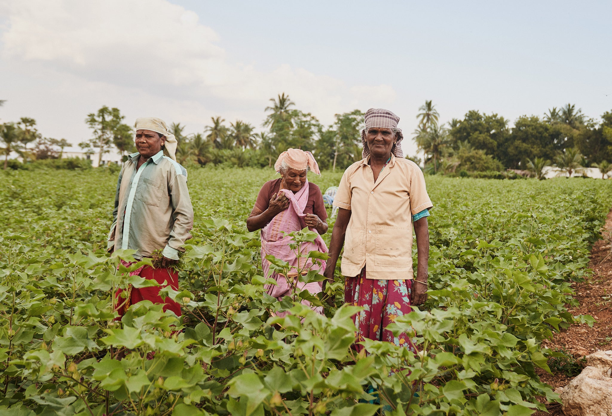 The group of women who helped plant the green gram and control the weeds