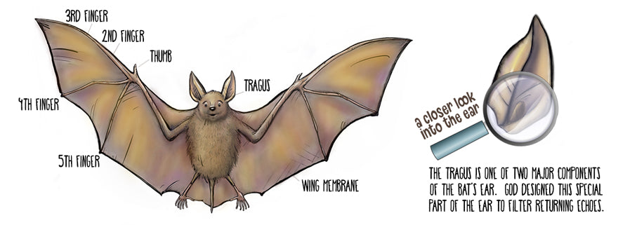 Bizzare Features of Bats