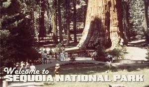 Greeting from Sequoia National Park