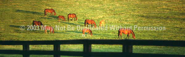 Window Graphic - 16x54 Grazing Horses - ClearVue Graphics - Dropship Direct Wholesale