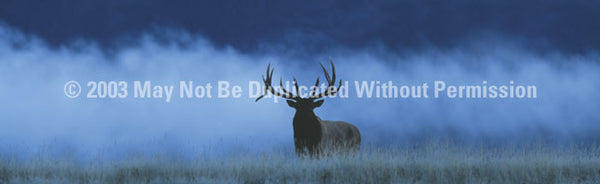 Window Graphic - 20x65 Elk in Fog - ClearVue Graphics - Dropship Direct Wholesale