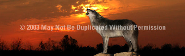 Window Graphic - 20x65 Howling at Sunset - ClearVue Graphics - Dropship Direct Wholesale