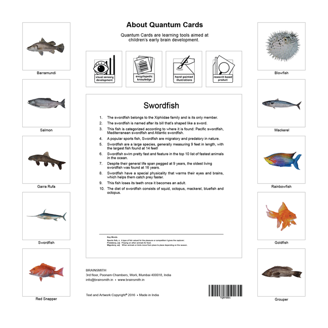 Fish Flashcards for Kids
